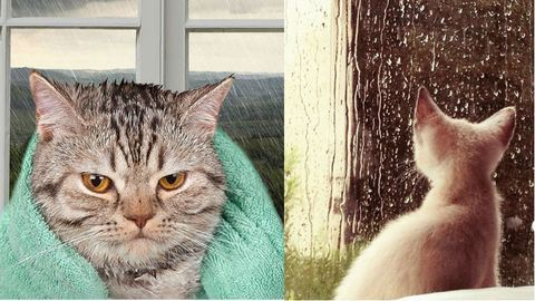 17 macska, akik ugyanúgy utálják az esőt, mint mi – vicces képek