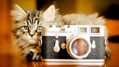 Macskák, akik nem szeretik, ha kamerázzák őket – vicces videó