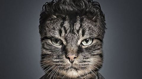 Gazdáik bőrébe bújtatta a macskákat egy fotós