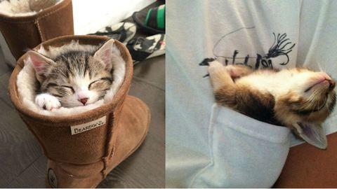 20 alvó macskás kép, aminél ma már nem találsz cukibbat! – képek