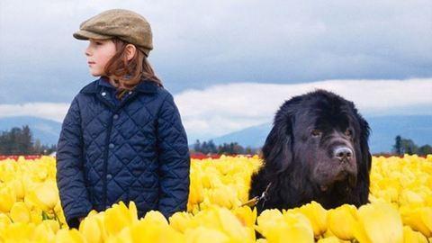 Óriás kutyák vs. kisgyerekek – létezhet ennél cukibb?