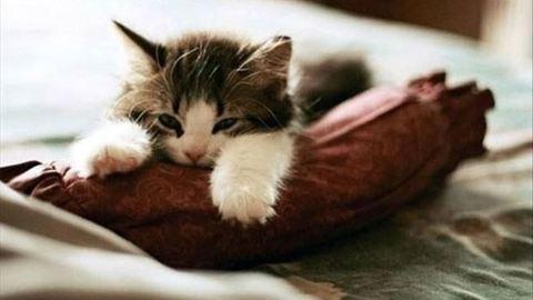 10 macskás gif, amelyek feldobják a napodat