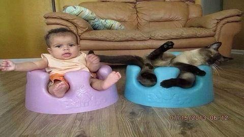 Kutyák és macskák furcsa helyeken – vicces fotók