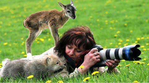 15 állat, akik fotósok szeretnének lenni – tündéri képek