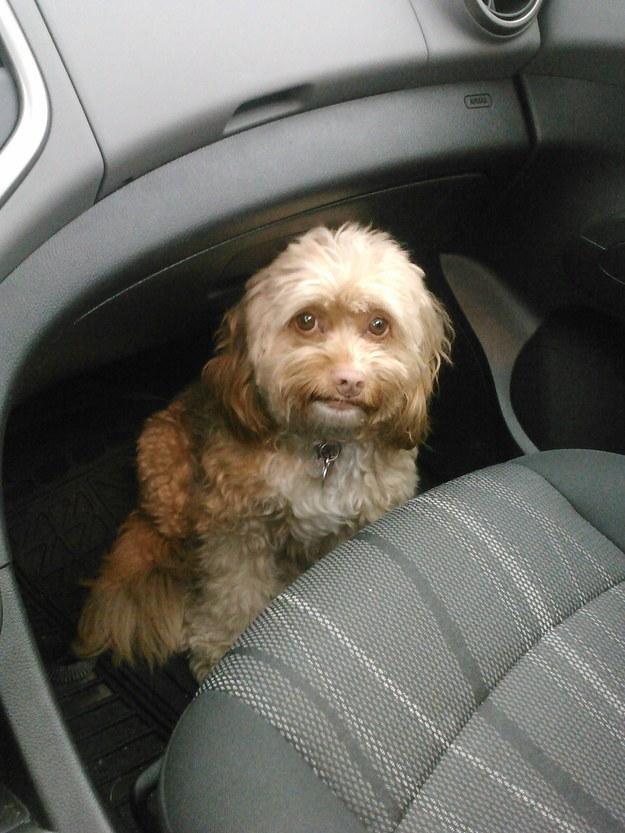 27 kutyus, akik tudják, hogy állatorvoshoz viszik őket - vicces képek
