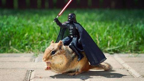 Ilyen lenne a Csillagok háborúja, ha mókusokkal forgatják – fotók