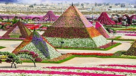 A világ legnagyobb virágoskertje Dubaiban