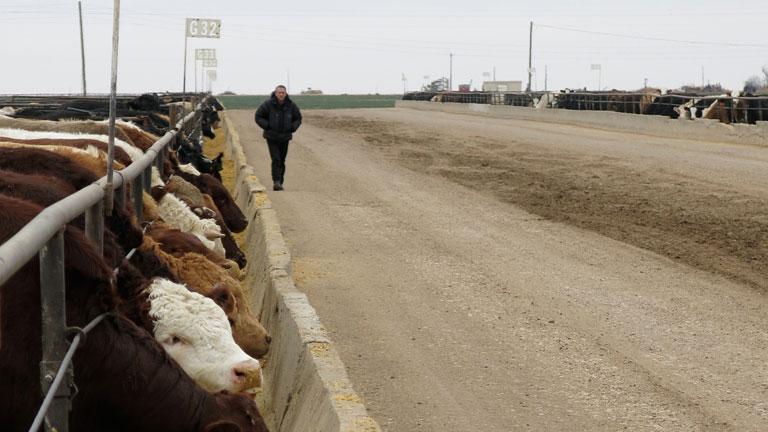 Nagyipari állattartás az USA-ban