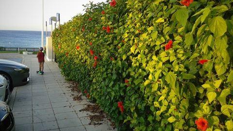 Ciprus: az ország, ahol hibiszkuszból van a kerítés