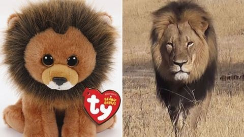 Plüssállattal emlékeznek meg a legyilkolt oroszlánról