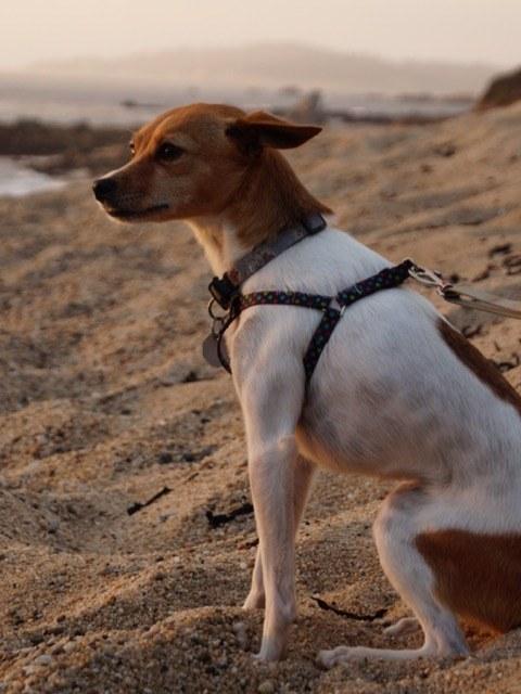 19 tündéri állat, akik szebbé teszik a vasárnapodat - cuki képek