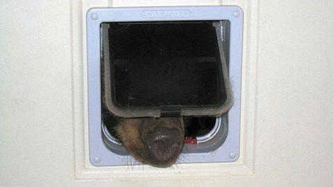 Nagy meglepetés a macskaajtóban: erre ért haza a ház ura