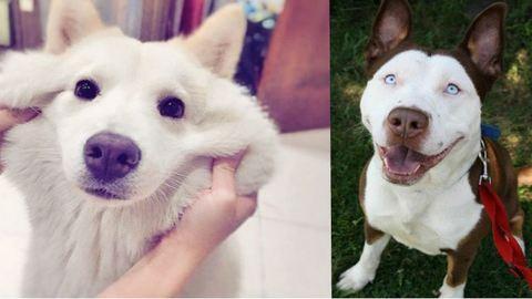 20 tündéri keverék kutyus, aki elrabolja a te szívedet is