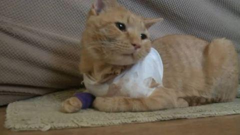 Hős! Macskája fogta fel a golyót a kisfiú elől