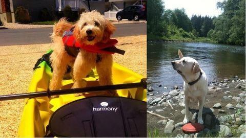 19 kutyus, aki nem akarja, hogy véget érjen a nyár – tündéri képek