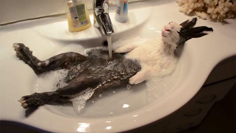 Kínzó kérdés: te zuhanyoztál ma reggel?