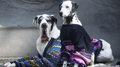 Ezek a kutyák jobbak, mint a szupermodellek – fotók