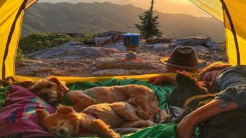 Ennyire jó a kempingezés kutyákkal – cuki fotók