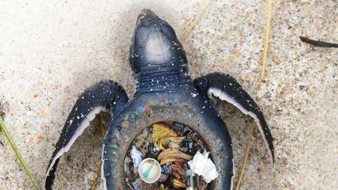 Sokkoló kampány indult az óceánok állatainak védelmében – képek