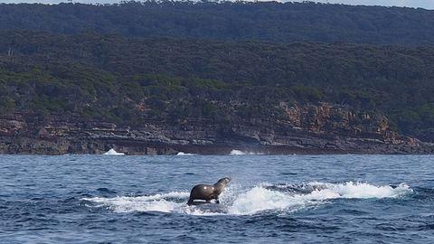 A bálnán szörföző fóka az új madáron utazó menyét – elképesztő fotó