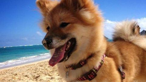 20 boldog kutya, akitől azonnal mosolyogni támad kedved