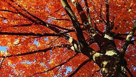 Szeptember 23-án különleges nap jön: vonzd magadhoz a jólétet és a bőséget!