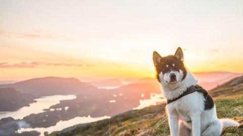 Felmondott, hogy kutyájával körbeutazza Norvégiát – csodálatos képek