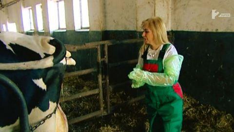 Ez nem vicc, Kiszel Tünde kisborjút segített a világra – videó