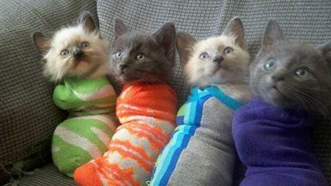 7 cica zokniban, akik garantáltan mosolyt csalnak az arcodra
