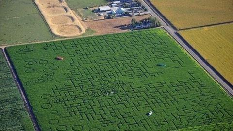 A világ legbonyolultabb kukoricalabirintusa