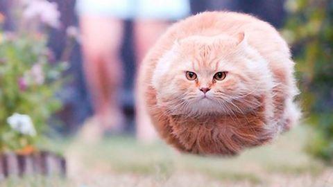 22 tökéletes pillanatban elkapott macskafotó