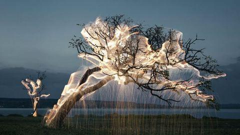 Csodás fotók készültek egy különleges világító fáról