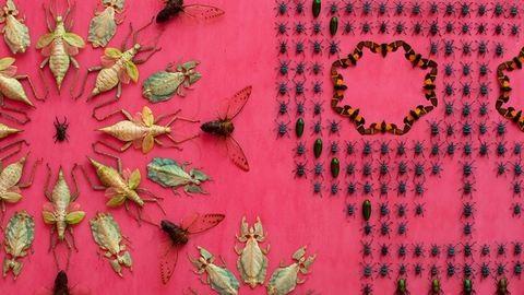 5 ezer bogár nyüzsgött a tapétán – megdöbbentő fotók