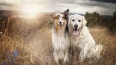 Szívmelengető őszi képek kutyusokkal