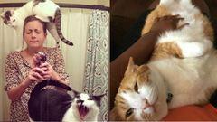 22 dolog, amit csak a macskások érthetnek meg
