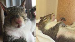 Egy végtelenül cuki megmentett mókusért rajong a világ - képek
