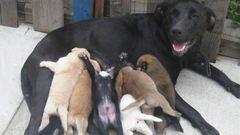 Megacuki kutyamamák és kölykeik - fotók