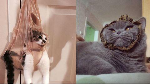 22 macska, akik hasznos tanácsokkal látnak el az élet minden területén – vicces képek