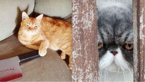 15 macska, akik olyan tekintettel néznek ránk, hogy megijedünk tőlük – képek