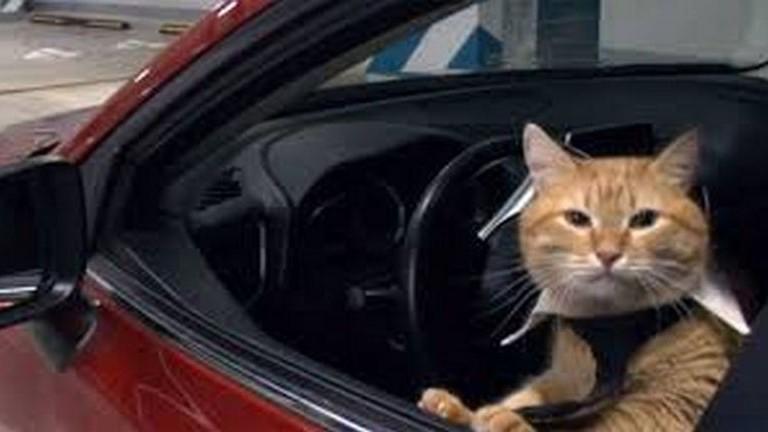 Macskák vették át az uralmat egy orosz irodaházban