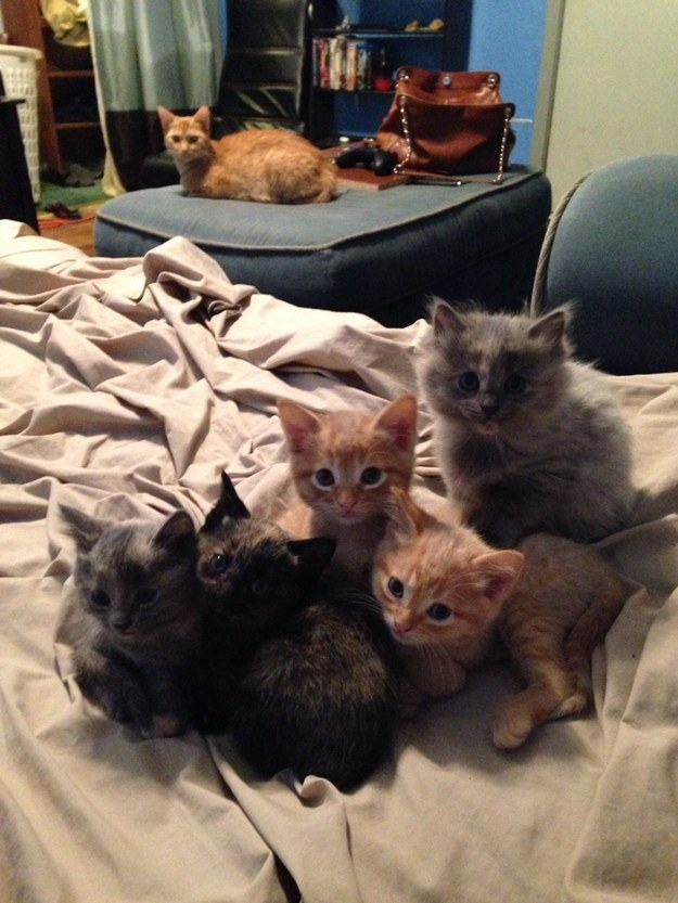 17 ici-pici macska csapat, akik leigázzák a világot annyira cukik - gifek