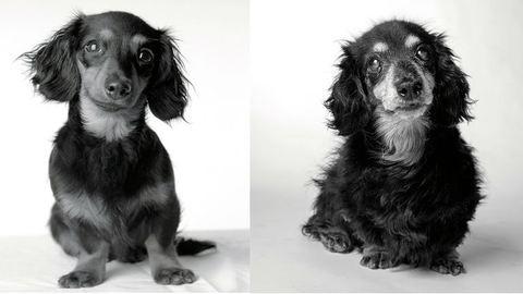 Kutyaportrék akkor és most: megható fekete-fehér képeket készít egy fotós