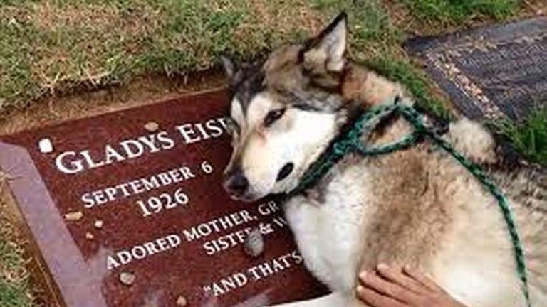 Hihetetlen, amit ez a kutya csinált halott gazdája sírjánál