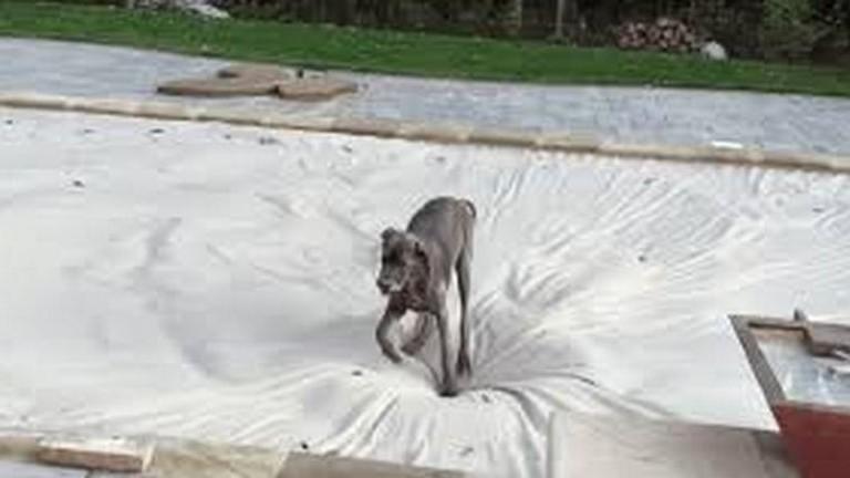 Óriás dognak óriási vízágy jár! Nem fogod elhinni hol játszik ez a kutya – videó