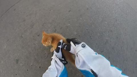 Elképesztő videó: kiscicát mentett a vagány motoros