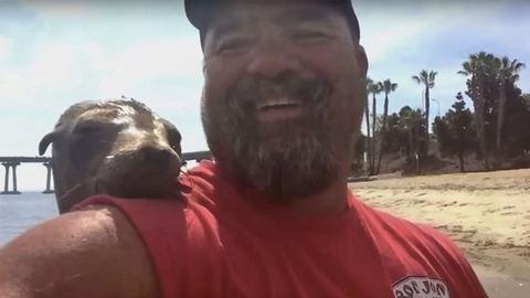 Ennél a fókánál cukibb barátja senkinek sincs – tüneményes videó