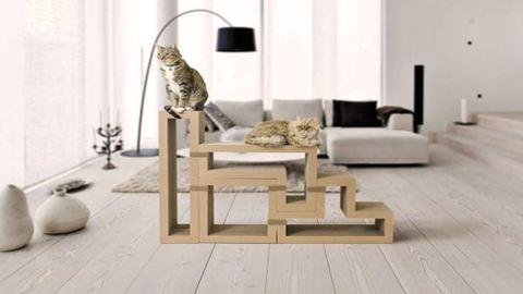 Itt a lakberendezés szent grálja: könyvespolc és macskajáték egyben – fotó