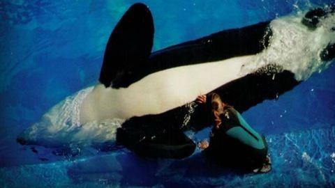 Megdöbbentő videó: ilyen, amikor az állatok visszaadják azt, amit az emberek tesznek velük