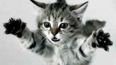 Az állatolimpia első 10 helyezettje – vicces képek