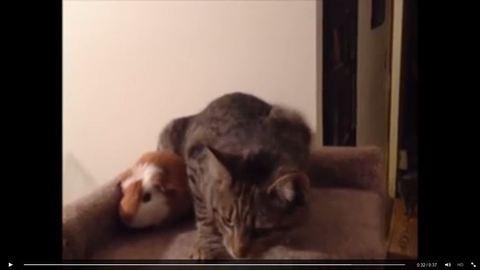 Ez a cica sík ideg, mert a tengerimalac elfoglalta a helyét – videó